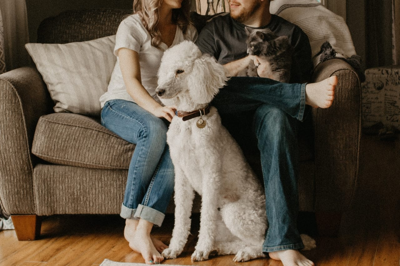 couple-with-their-poodle-dog