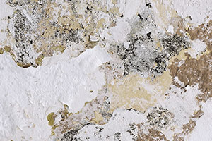 mold-cleaning